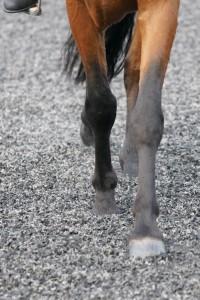 equestrian rubber